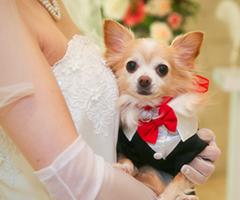 ペットと叶える結婚式